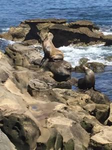 18 Seals
