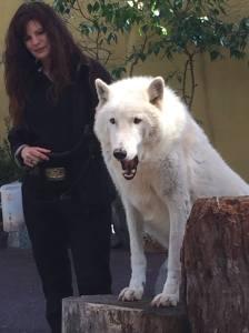 4 Arctic Wolf
